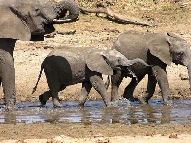 Spot de Big Five in Zuid-Afrika