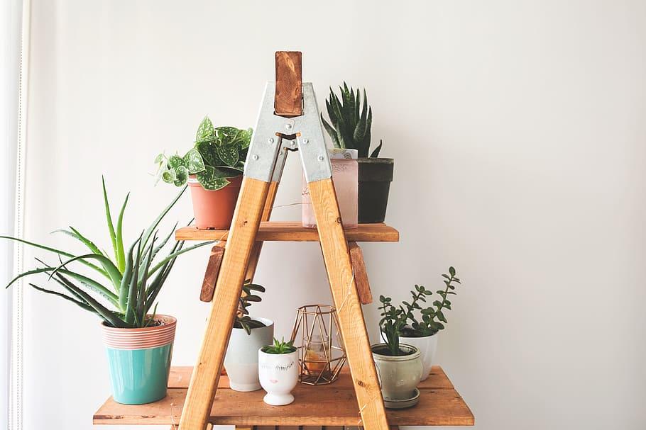 Breng de gezelligheid in huis met planten