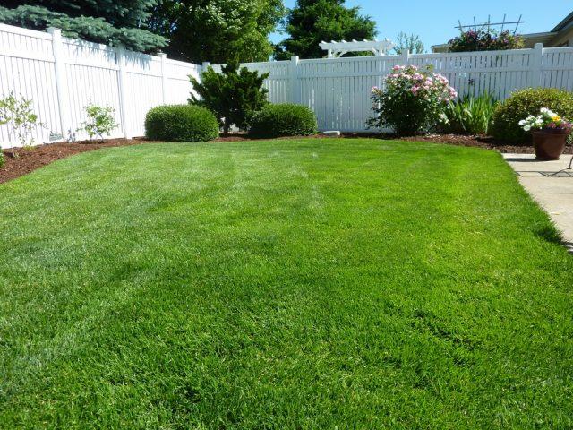 3 Voordelen van kunstplanten voor buiten