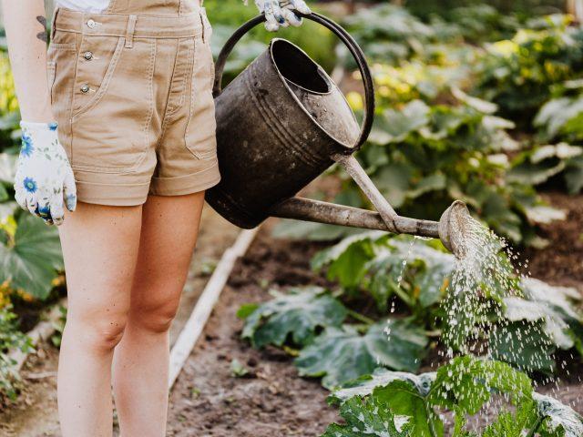 De juiste gereedschappen voor jouw tuin